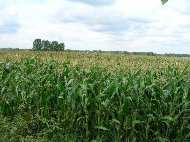 Crop field, Orchard Farm