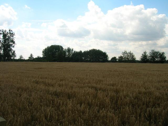 Farmland near Wigman Hall