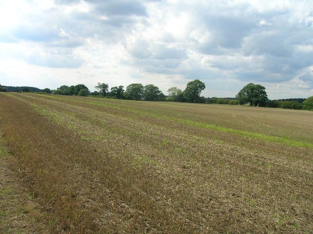 Farmland near Warren House Farm