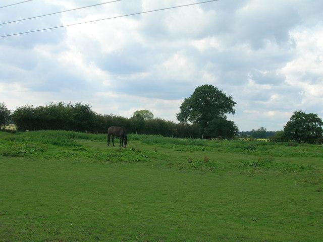 Farmland near Sheepwalk Farm