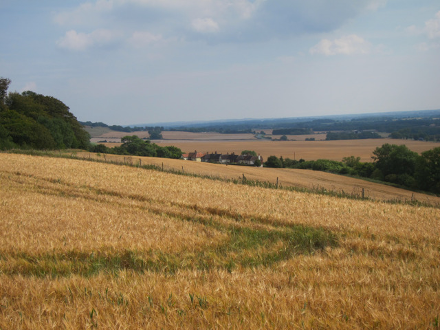 Barley fields by Hubbards Hill