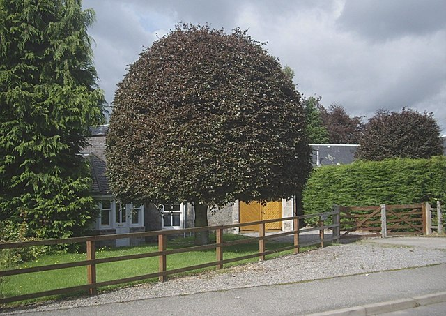 Beehive topiary, Annesley Grove