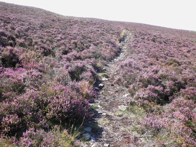 Footpath through the heather, on Luccombe Hill
