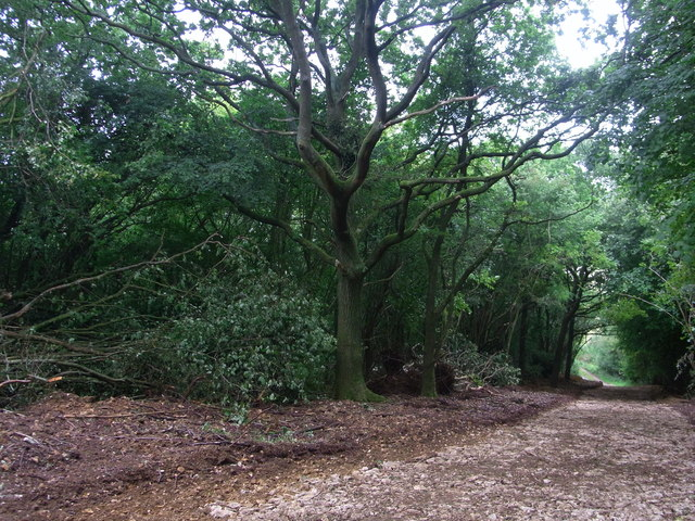 Stoned track below Hill Barn