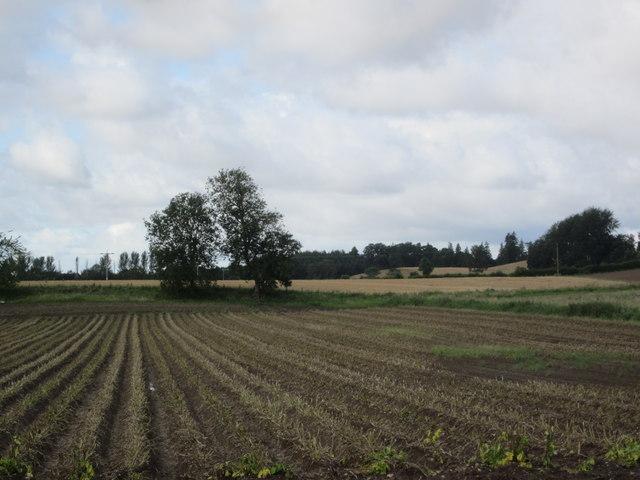 Hallyards Potato Field