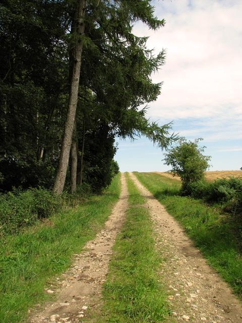 Track to Bircham Common