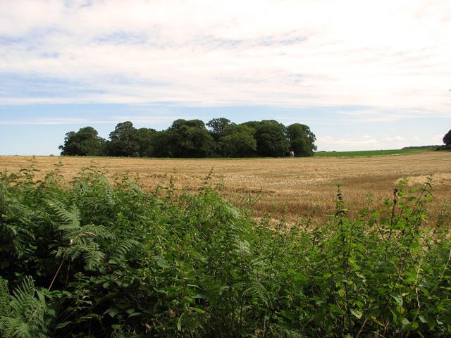 View across Bircham Common