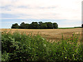 TF7831 : View across Bircham Common by Evelyn Simak