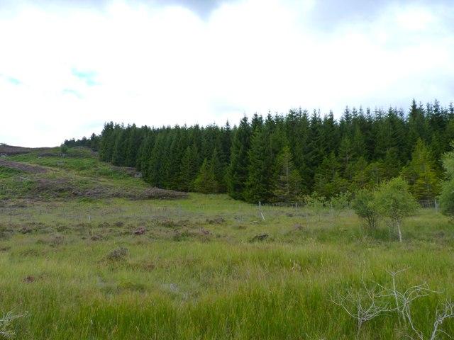 Edge of the woodland