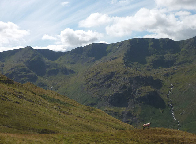 A sheep above Grisedale