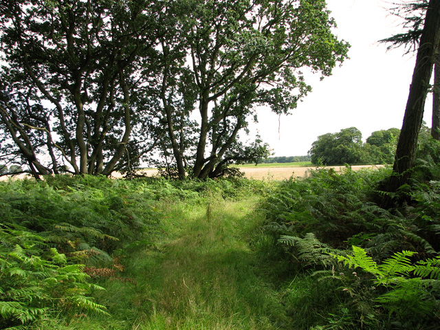 Woodland on Tofts Hill