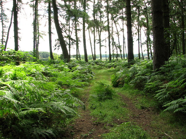 Woodland track on Tofts Hill