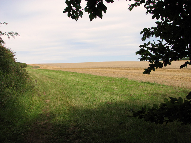 Harvested field beside the Peddars Way