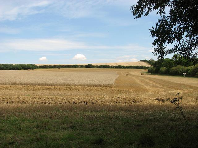 Undulating fields north of Fring Road, Sedgeford