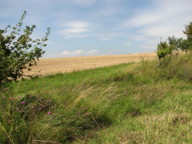 Gap in field boundary hedge, Sedgeford