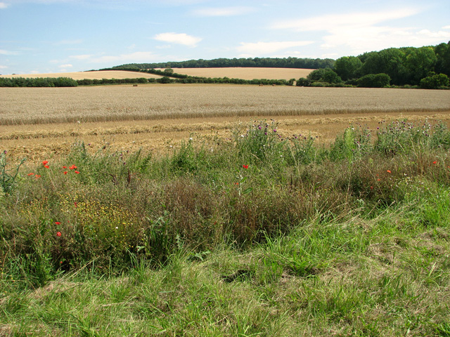 Fields east of Old Plantation, Sedgeford