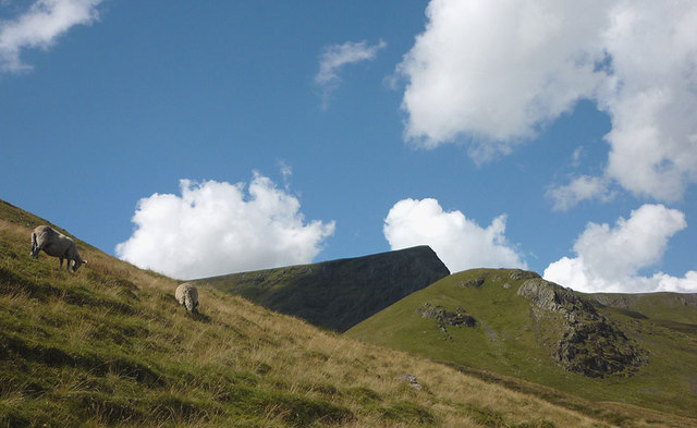 Sheep by the track to Scales Tarn, Blencathra