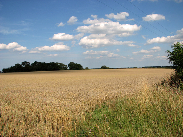 Field east of Shammer, North Creake
