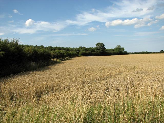 Field boundary north of Plateau Plantation