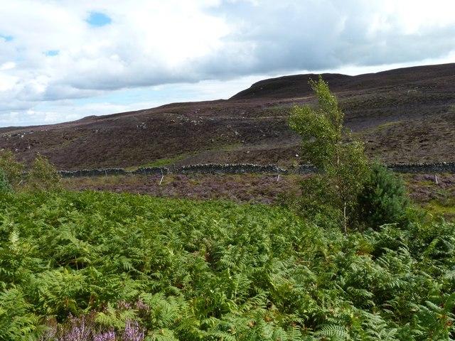 Bracken, heather, dyke and hills