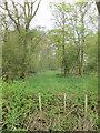 TL6250 : Rands Wood by Hugh Venables