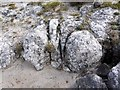 NY8129 : Outcrop of sugar limestone (close up) by Andrew Curtis