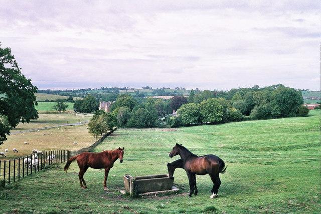 Horses on the Launde estate
