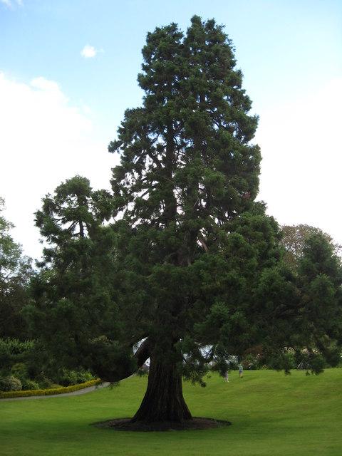 Magnificent tree specimen
