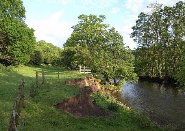 Eroding bank, River Dove
