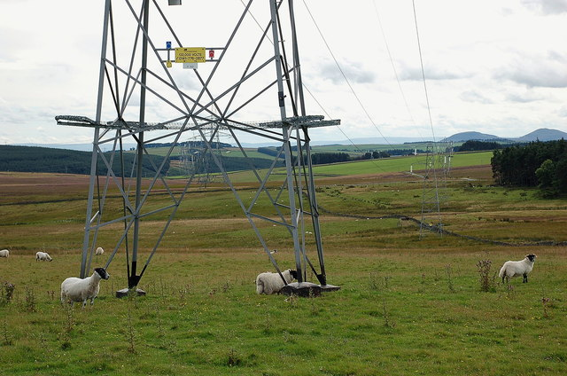 Two power lines, Brown Rig