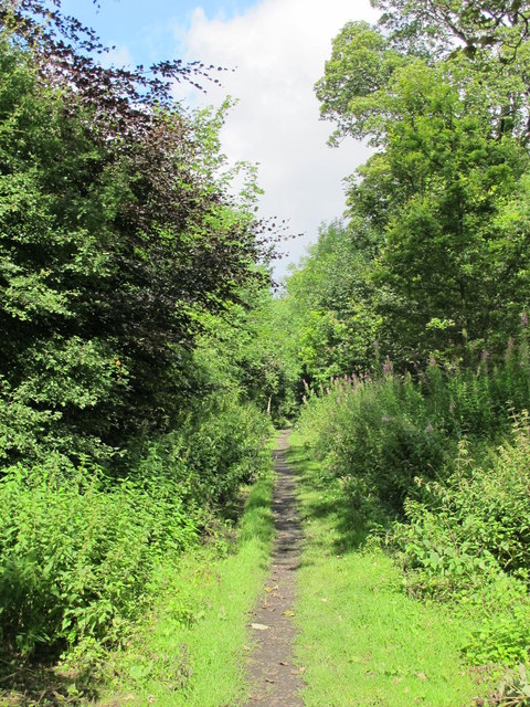 Trackbed of the former mineral railway between Ashes Quarry and Crawleyside