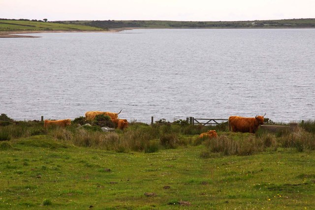 Highland cattle by the lake