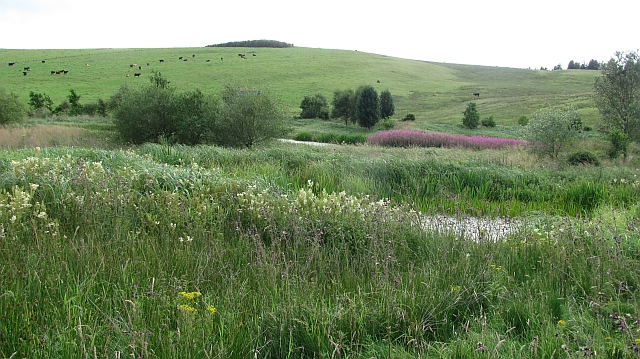 Wetland on the Snawdon Burn