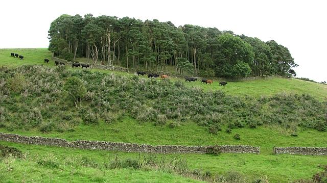 Small woodland, Snawdon