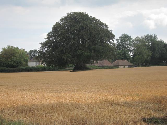 Field off Warren Street