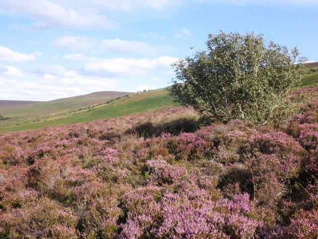 Hillside, below Great Rowbarrow