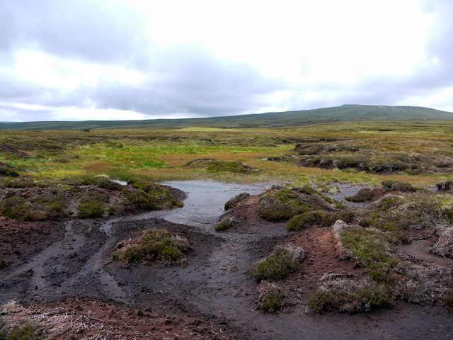 Peat bog on Great Cocklake