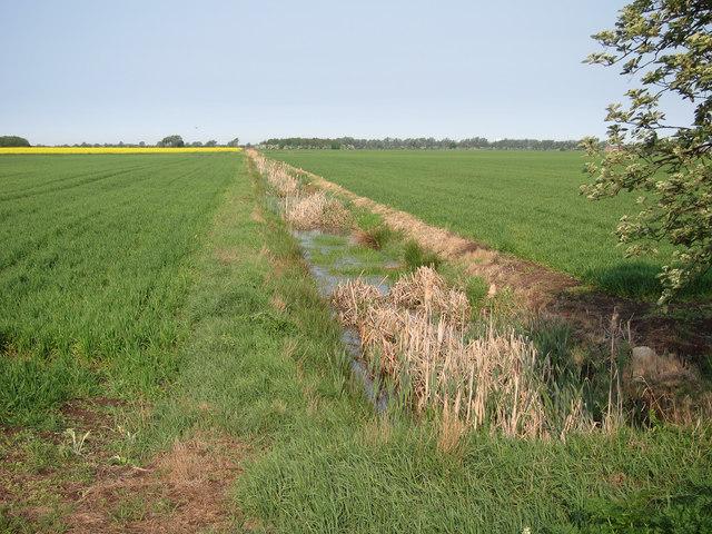 Ditch across Lower Delphs