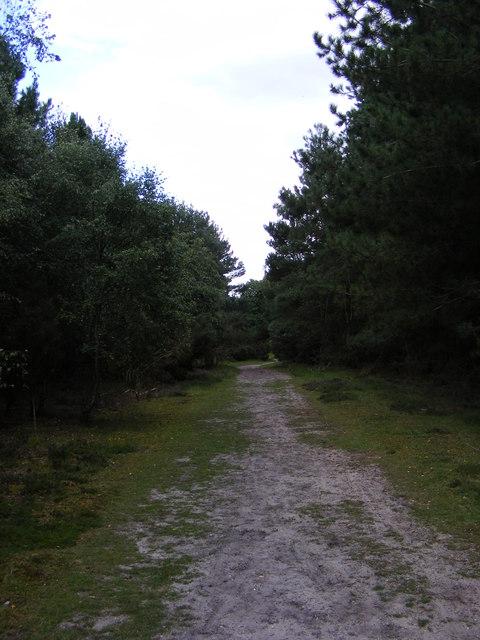 Footpath to Sandlings Walk over Blaxhall Heath