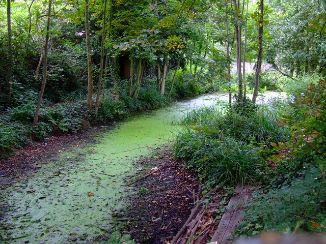 Pond off Apton Road