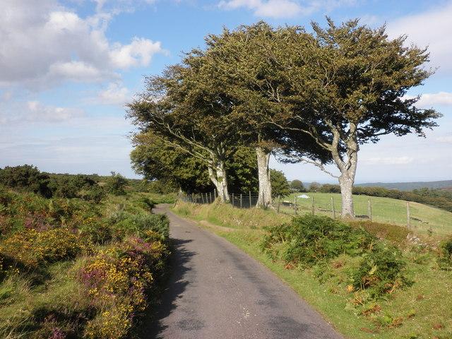 Tree-lined road, below Stoke Ridge