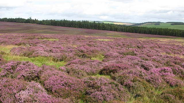 Moorland below Dirrington Great Law