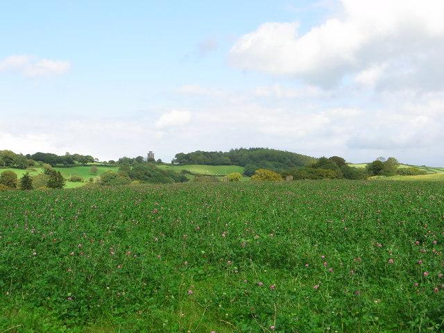 Clover Field, Waun Las National Nature Reserve, National Botanic Garden of Wales