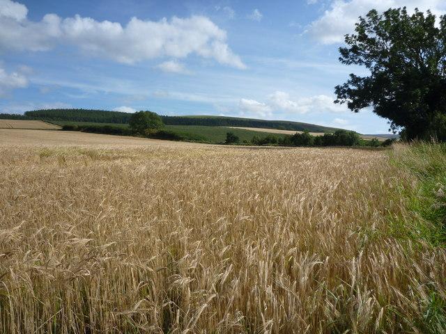 Rural East Lothian : Field Scene Near Stenton Loan