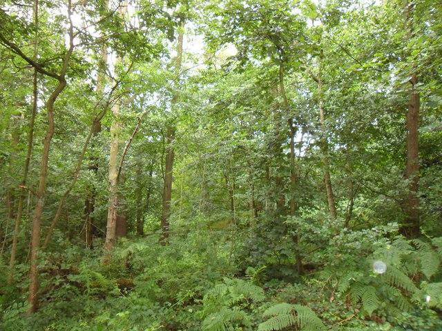 Clough Wood