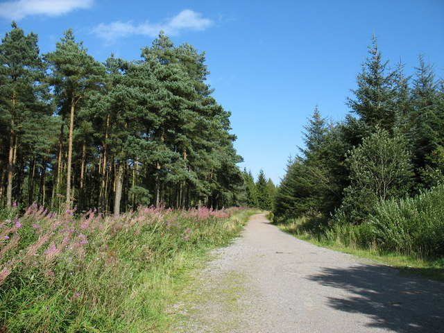 Forest track in Stockhill Wood