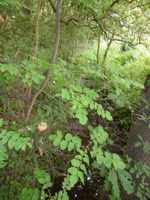 Lumb Dike near Almondbury
