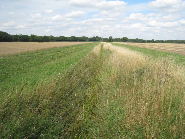 Drain near Thorney