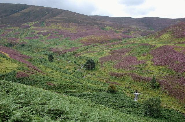 Green and purple around the Drumelzier Burn