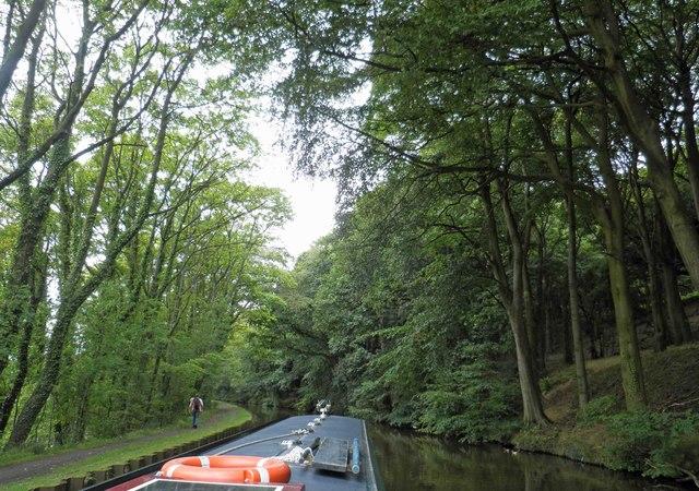 Farnhill woods alongside the Leeds Liverpool canal